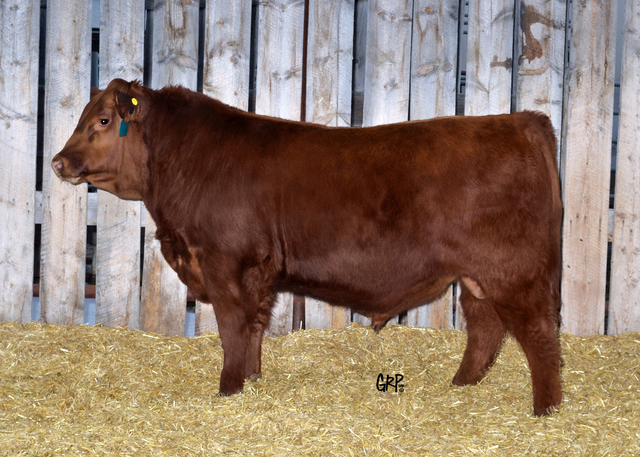 Lot 37:  RED BROWN CREEK AUTHENTIC 140<br><a href='http://abri.une.edu.au/online/cgi-bin/i4.dll?1=20213329&2=2420&3=56&5=2B3C2B3C3A&6=5A5D585B2220202420&9=5B5F5A50' target='_blank'>View CAA Page &raquo;</a>